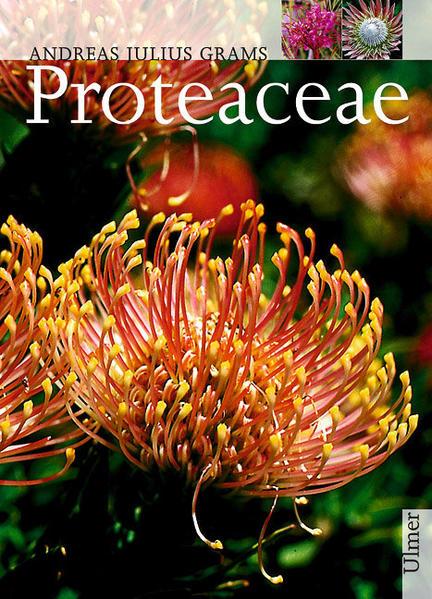 Proteaceae als Buch (gebunden)