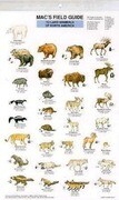 Land Mammals of North America
