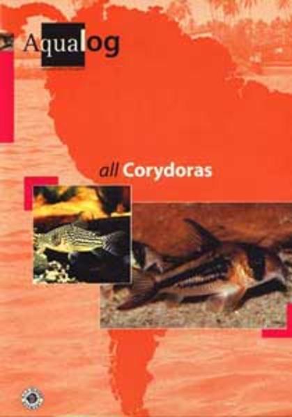 All Corydoras als Buch (gebunden)