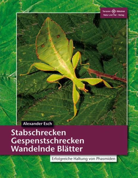 Stabschrecken, Gespenstschrecken, Wandelnde Blätter als Buch (kartoniert)