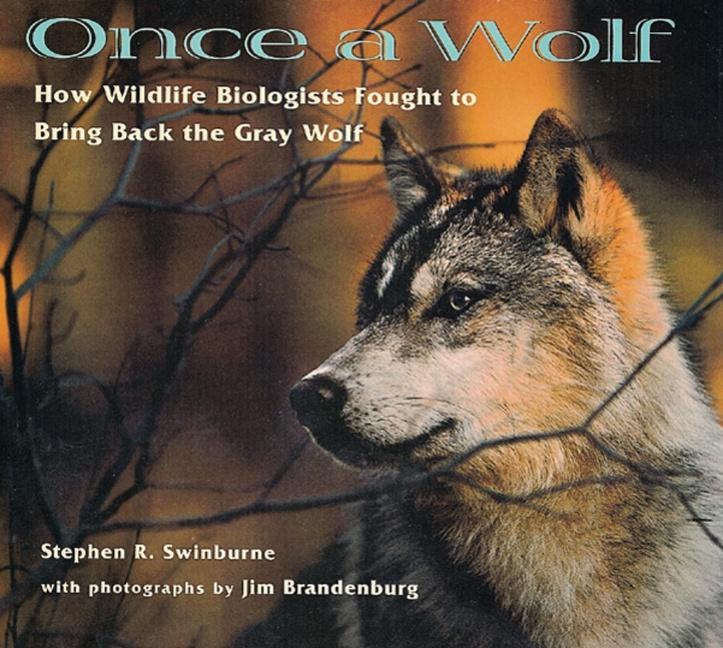 Once a Wolf: How Wildlife Biologists Fought to Bring Back the Gray Wolf als Taschenbuch