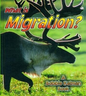 What Is Migration? als Buch (gebunden)