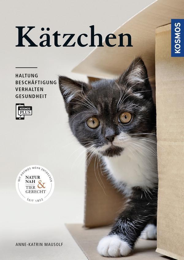 Kätzchen als Buch (kartoniert)