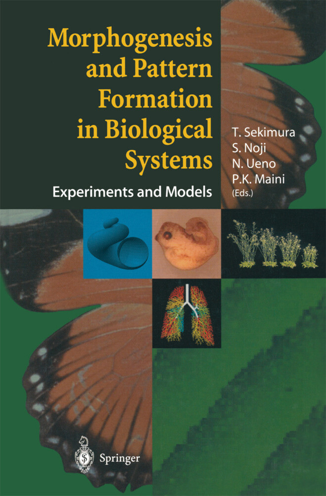 Morphogenesis and Pattern Formation in Biological Systems als Buch (gebunden)