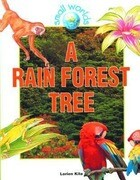 A Rain Forest Tree