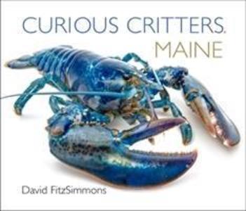 Curious Critters Maine als Buch (kartoniert)