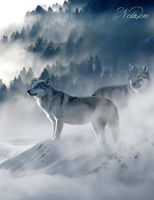 Fantasy Notizbuch: Wölfe im Nebel - weiße Seiten mit Eckmotiv als Buch (kartoniert)
