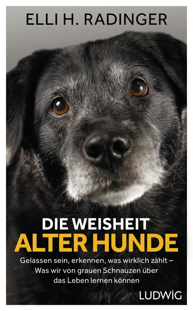 Die Weisheit alter Hunde als eBook