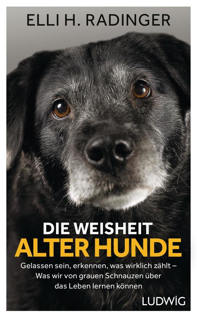 Die Weisheit alter Hunde als Buch