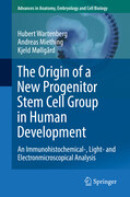 The Origin of a New Progenitor Stem Cell Group in Human Development