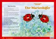 Der Marienkäfer. Natur-Kamishibai