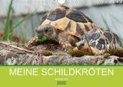 Meine Schildkröten (Wandkalender 2020 DIN A4 quer)