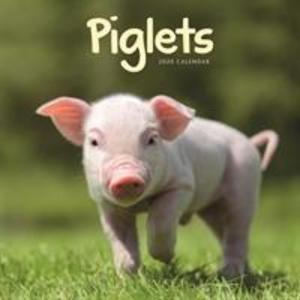 Piglets Mini Square Wall Calendar 2020 als Kalender