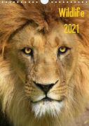 Wildlife 2021 (Wandkalender 2021 DIN A4 hoch)