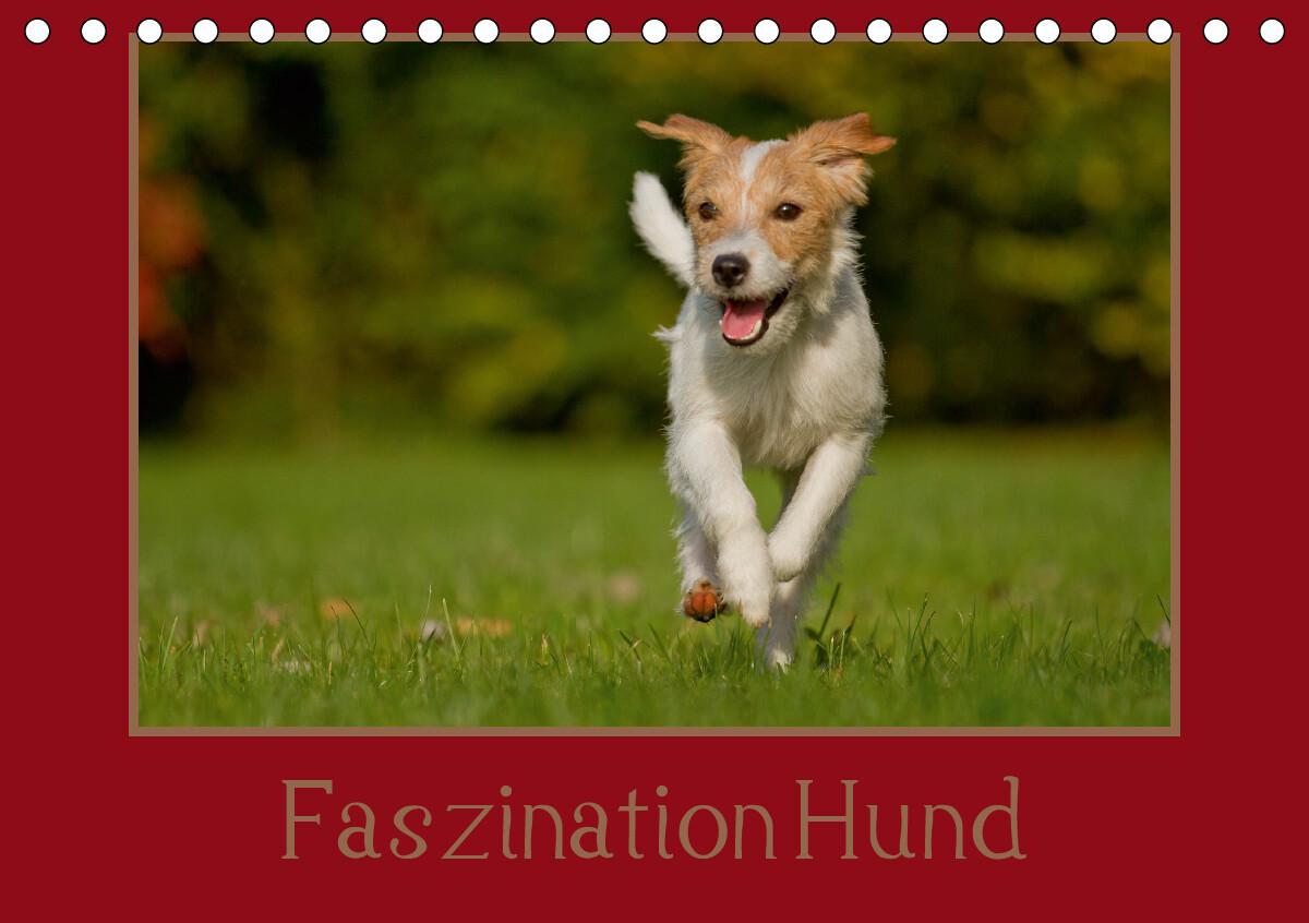 Faszination Hund (Tischkalender 2021 DIN A5 quer) als Kalender