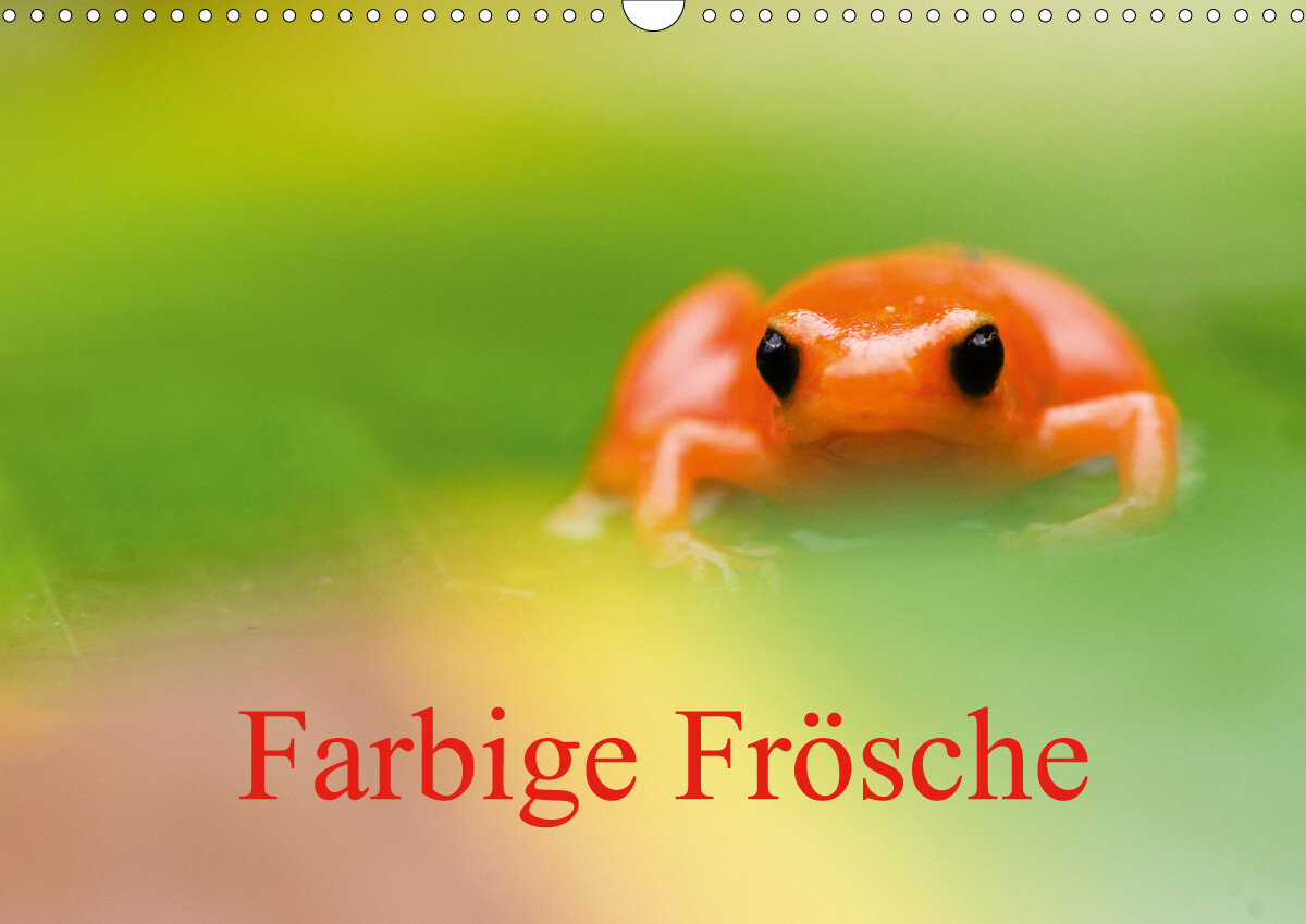 Farbige Frösche (Wandkalender 2021 DIN A3 quer) als Kalender