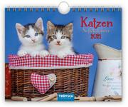 Notizkalender Katzen 2021 Wandkalender Postkartenformat