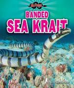Banded Sea Krait