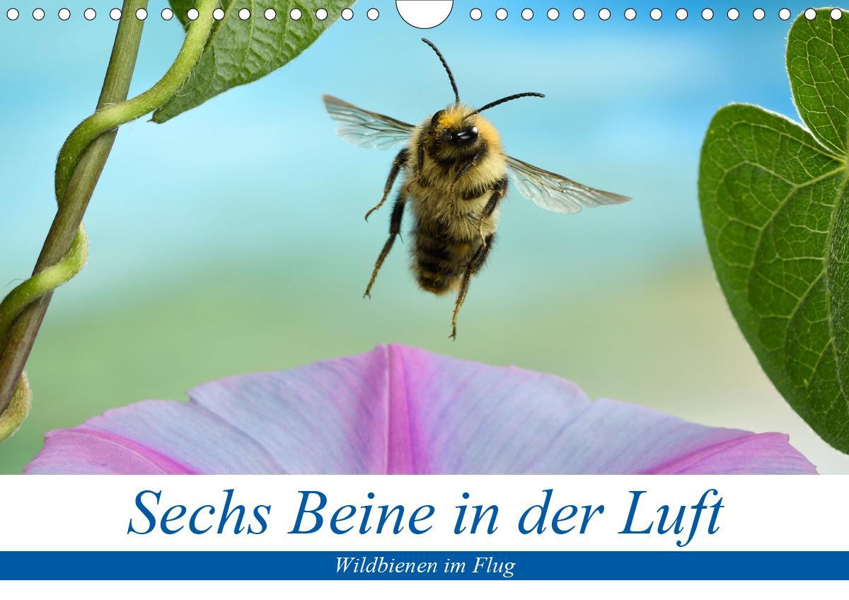 Sechs Beine in der Luft - Wildbienen im Flug (Wandkalender 2021 DIN A4 quer) als Kalender
