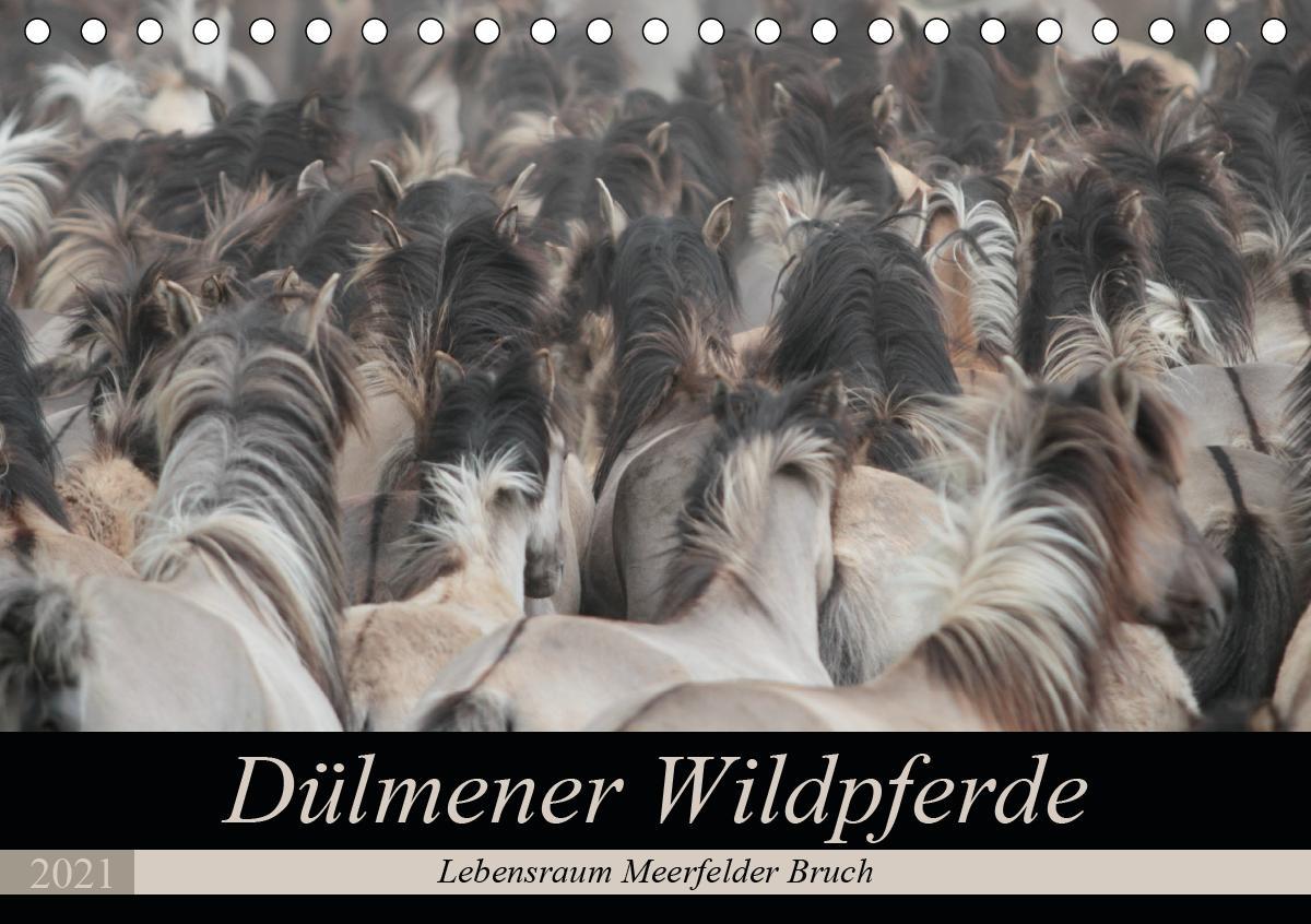 Dülmener Wildpferde - Lebensraum Meerfelder Bruch (Tischkalender 2021 DIN A5 quer) als Kalender