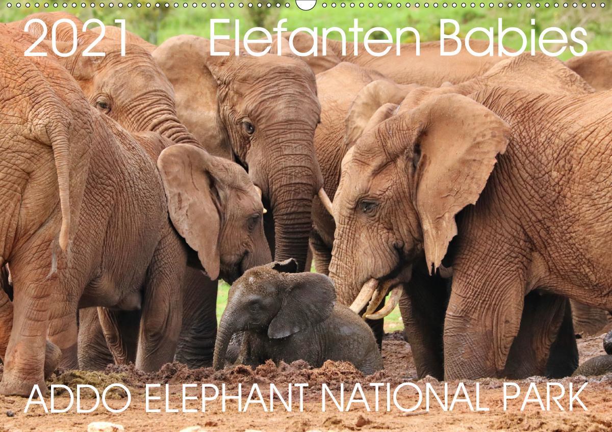ADDO ELEPHANT NATIONAL PARK Elefanten Babies (Wandkalender 2021 DIN A2 quer) als Kalender