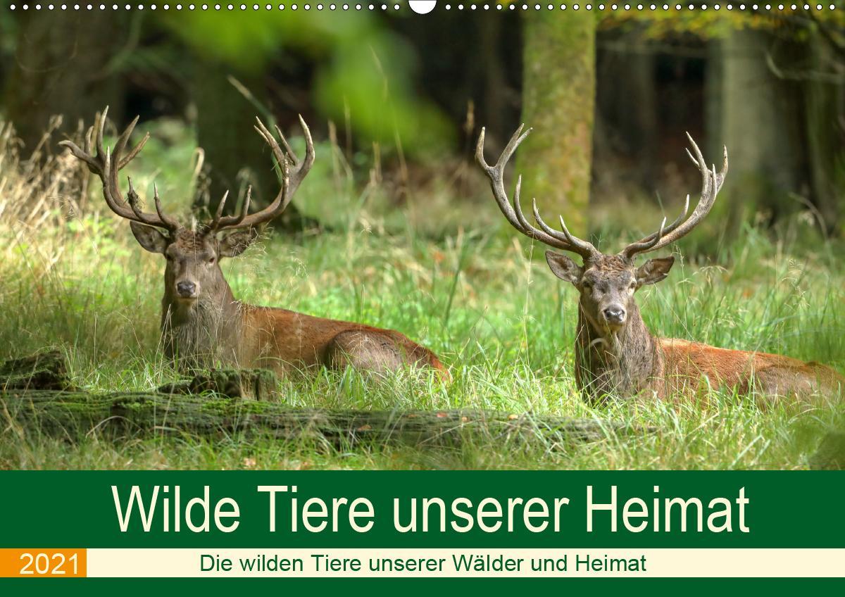 Wilde Tiere unserer Heimat (Wandkalender 2021 DIN A2 quer) als Kalender