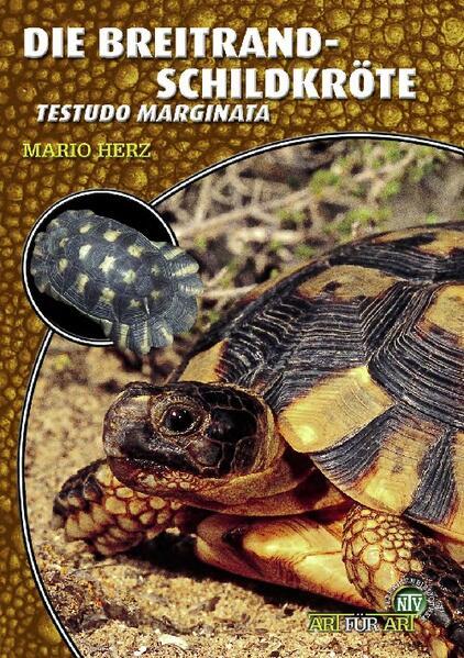 Die Breitrandschildkröte als Buch (kartoniert)