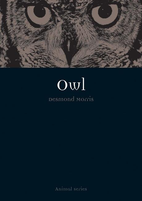 Owl als Taschenbuch